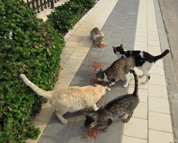 cut cats