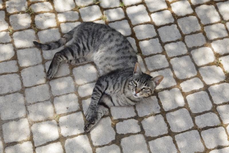 Maxie, the noble cat